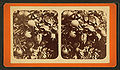 (Oranges) Florida, from Robert N. Dennis collection of stereoscopic views.jpg