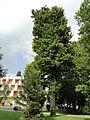 АЛБЕНА (ALBENA) - panoramio (31).jpg