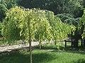 Алея от Ботаническата градина 010.JPG