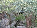 Буцький каньйон, вересень 2017р. 04.jpg