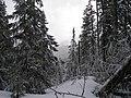 Вид з Добошанки на Малий Горган.JPG