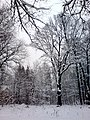 В парке - panoramio - Дмитрий Мозжухин (4).jpg