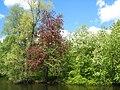 Елагин остров, весеннее цветение.jpg