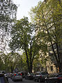 Каштан Іващенко 06.jpg