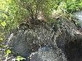 Миоценски спруд Ташмајдан, природни споменик, 004.JPG