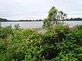 Озеро Бологое 05.jpg