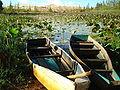 Озеро лотосов.JPG