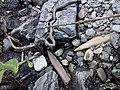 Остатки белемнитов и других ископаемых организмов в береговых отложениях р.Унжа.jpg