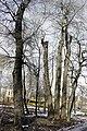 Парк по вул. Кобзарській 17.jpg