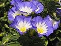 Растения в Седово 037.JPG