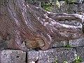 Руїни Високого замку XIV—XVIII ст.jpg