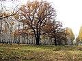Слева-остатки дубовой аллеи(пос. Дачный). - panoramio.jpg