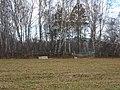 Старинное кладбище - panoramio.jpg