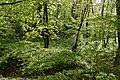 Трускавецький парк 13.jpg
