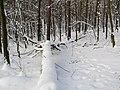 Украина, Киев - Голосеевский лес 84.jpg
