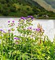Цветы - panoramio (8).jpg