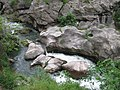 Վայրի բնություն-1 102.jpg