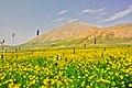 گلهاي وحشي نزديك تالاب سولگان - panoramio.jpg