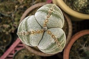 گونه های کاکتوس در گلخانه دنیای خار در قم 15.jpg