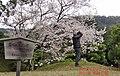 外国人観光客のマナー 2016年 栗林公園.JPG