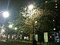 早咲きのさくら - panoramio.jpg