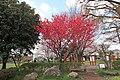 狛江市 谷戸橋広場 201504020948 - panoramio.jpg