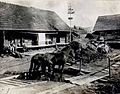 01915 Hufbad für Marode Pferde in Oporzec. 1915.jpg