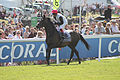 033 Epsom Derby 2015 - Golden Horn and Frankie Dettori going to post (17968412233).jpg