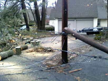 A fallen tree from where Coti reported. Image: Peter Coti.