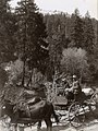 1913. A field trip out of the Placerville Station. J.J. Sullivan (left) and P.D. Sergent on a trip up the American River Canyon near Kyburz, California. (37317656701).jpg