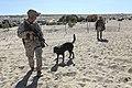 1st LEB participates in Desert Scimitar 15 150409-M-JH782-436.jpg