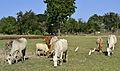 201312161452b (Hartmann Linge) Sukhothai Phra Phai Luang.jpg