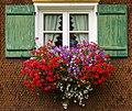 2013 09 18 002 Fenster mit Blumenkasten.jpg