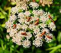 2014-07-16 17-00-17 coleopteres.jpg