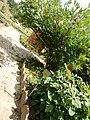 2015-05-27 Paris, Jardin des plantes 23.jpg