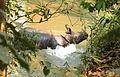 2016-04-03 Chitwan National Park, Nepal. 5894.jpg