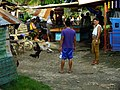 2016-09-28 Cockfighting in Buaya, Lapu-Lapu City, Cebu, Philippines ブアヤ村の闘鶏をする男たち DSCF6698.jpg