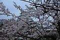 20160403 Himeji-Castle 3276 (26732319732).jpg