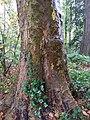 20171115 Stam van boom in Overbosch 14.jpg