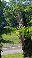 2020-08-09 Isar München nach der Flut 108.jpg