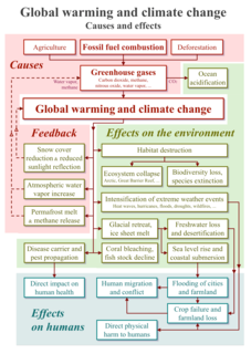 Climate change feedback for positive and negative feedbacks associated with climate change