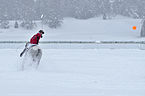 30th St. Moritz Polo World Cup on Snow - 20140201 - Cartier vs Ralph Lauren.jpg