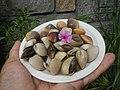 4022Common houseflies cats ants plants foods of Bulacan 53.jpg
