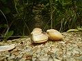 4087Ants Common houseflies foods delicacies of Bulacan 59.jpg
