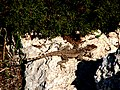 A@a. agia napa 2 (dont be afraid there is no crocodile. is Kourkoutas) Cyprus - panoramio.jpg
