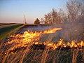 A Burning for Conservation in Southeastern South Dakota (16998708632).jpg