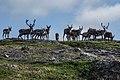 A curious herd of reindeer - panoramio.jpg