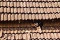 A feral cat sleeping on a roof in Arambol.jpg