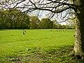 A field of kangaroos near Buss Farm - geograph.org.uk - 1624684.jpg