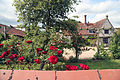 A house and red rose in Great Waltham, Essex, England 02.JPG